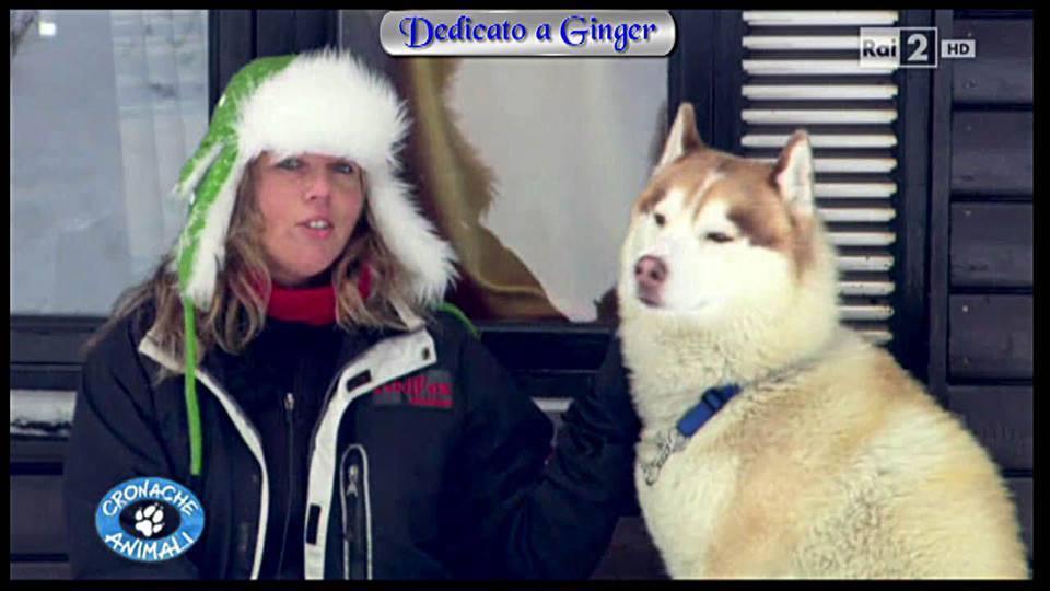 Vivere in Lapponia tra gli huskies come Ginger ed i buoi muschiati